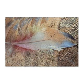セネガルのノガン科の羽の終わり アクリルウォールアート