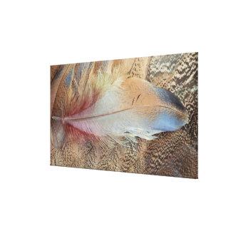 セネガルのノガン科の羽の終わり キャンバスプリント