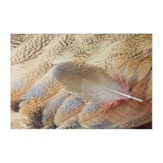 セネガルのノガン科の羽の静物画 アクリルウォールアート