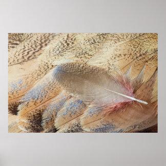 セネガルのノガン科の羽の静物画 ポスター