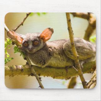 セネガルのBushbaby (ガラゴ科Senegalensis) マウスパッド