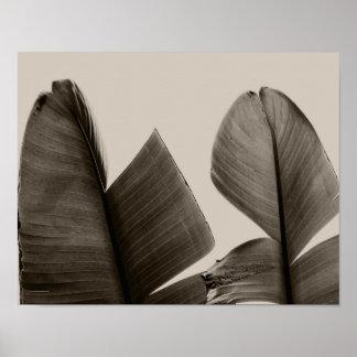 セピア色のバナナの木の葉 ポスター