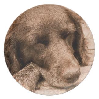 セピア色の睡眠犬 プレート
