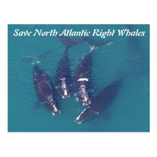 セミクジラによってがによる上がった北大西洋を救って下さい ポストカード