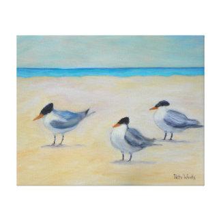 セントオーガスティンのビーチのキャンバスのプリントの王室のなアジサシ キャンバスプリント