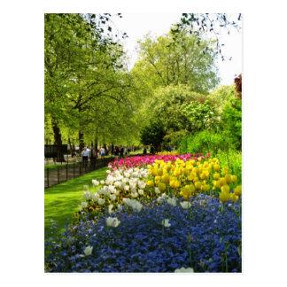 セントジェームズ黄色い公園、ロンドン、イギリスは開花します ポストカード