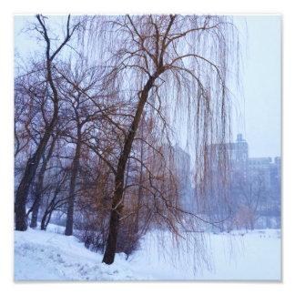 セントラル・パークの冬の木 フォトプリント