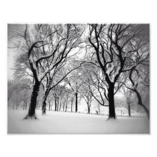 セントラル・パークは白で一面をおおいました フォトプリント