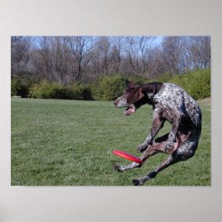 セントルイスディスク犬クラブ-創設者 ポスター