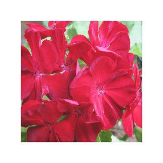ゼラニウムの植物の赤の花柄 キャンバスプリント