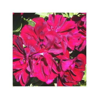 ゼラニウムの花の赤 キャンバスプリント