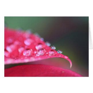 ゼラニウムの雨滴 カード