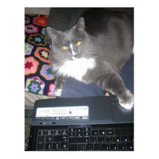 ソファのサーフィン猫 葉書き