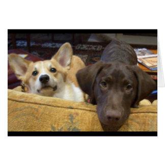 ソファーでつかまえられる子犬 グリーティングカード
