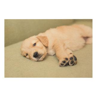 ソファーで横になっている子犬 ウッドウォールアート