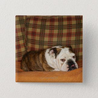 ソファーにあっているブルドッグ 缶バッジ
