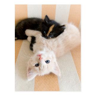 ソファーにあっている白くおよび黒い子ネコ はがき