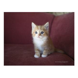 ソファーの猫 ポストカード