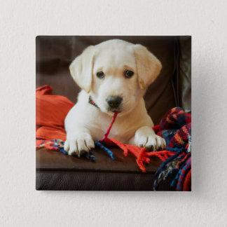 ソファーのGettyのイメージ|の子犬 缶バッジ