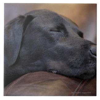 ソファー、クローズアップで眠った黒いラブラドル タイル