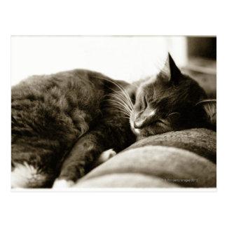ソファー(B&Wのセピア色の調子)で眠っている猫 ポストカード