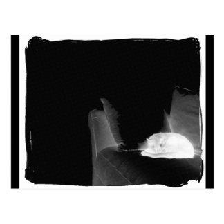 ソファー- B&Wの陰性の睡眠猫 ポストカード