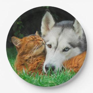 ソマリ族猫のシベリアンハスキーのかわいい友人の集まり愛 ペーパープレート