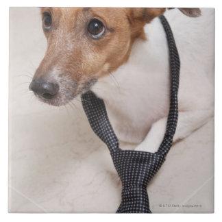 タイに置いている犬のクローズアップ タイル