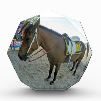 タイの馬 表彰盾