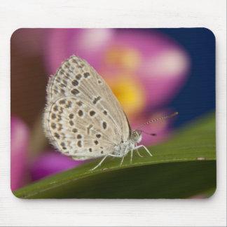 タイ、Khon Kaen、淡い色のな草の青 マウスパッド