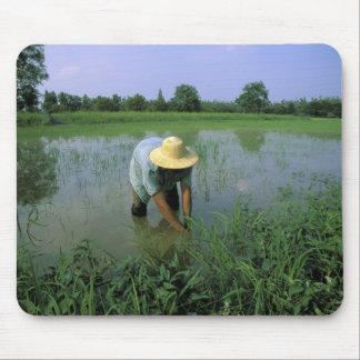 タイ、Sukhothai。 米の農家。 氏 マウスパッド