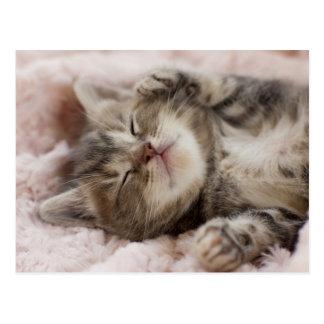 タオルで眠っている子ネコ ポストカード