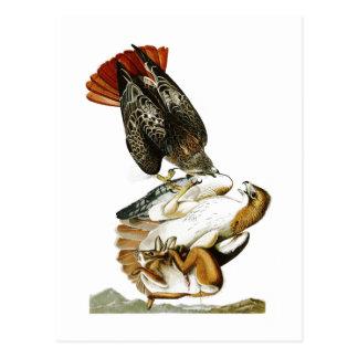 タカのジョン・ジェームズ・オーデュボンの赤後につかれた鳥アメリカ ポストカード