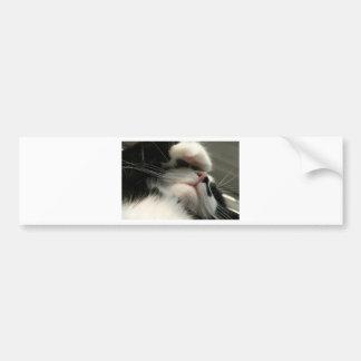 タキシードの子猫に嘔吐性頭痛があります バンパーステッカー