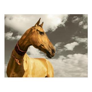 タキマンニスタンの金馬 ポストカード