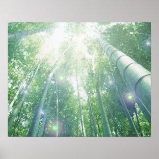 タケを通って照る太陽光線 ポスター