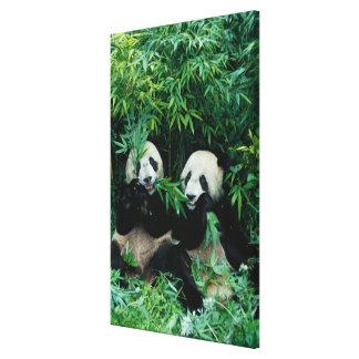 タケを、Wolong一緒に食べている、2頭のパンダ2 キャンバスプリント