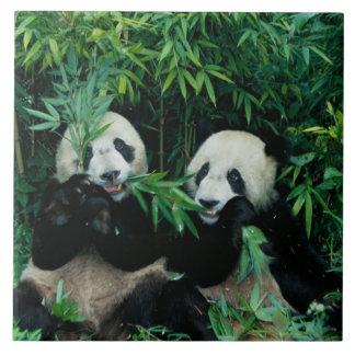 タケを、Wolong一緒に食べている、2頭のパンダ2 タイル