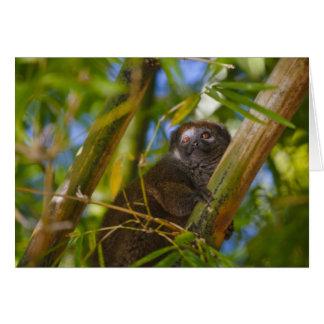 タケ森林のタケlemur、マダガスカル カード