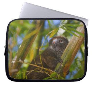タケ森林のタケlemur、マダガスカル ラップトップスリーブ