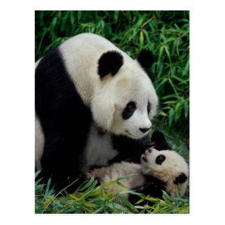 タケ薮のパンダそしてベビー、Wolongを生み出して下さい はがき