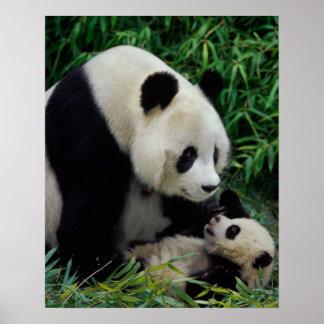 タケ薮のパンダそしてベビー、Wolongを生み出して下さい ポスター