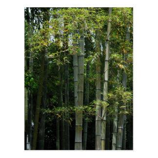 タケ雑木林 ポストカード
