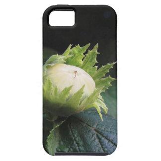 タスカニーの庭の木の緑のヘイゼルナッツ、 iPhone SE/5/5s ケース