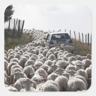 タスカニーの農地の道、群れがの妨げる車 スクエアシール
