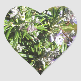 タスカニー、イタリアの花が付いているローズマリーの植物 ハートシール