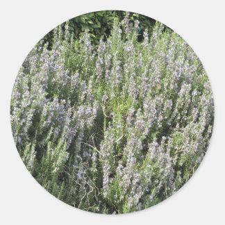 タスカニー、イタリアの花が付いているローズマリーの植物 ラウンドシール