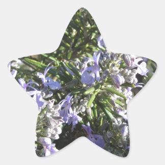 タスカニー、イタリアの花が付いているローズマリーの植物 星シール