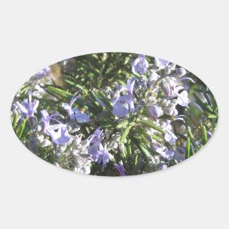 タスカニー、イタリアの花が付いているローズマリーの植物 楕円形シール