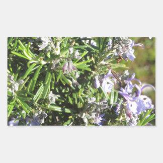 タスカニー、イタリアの花が付いているローズマリーの植物 長方形シール